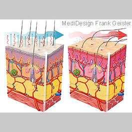MedicalPictures Physiologie Regulation Temperatur Haut