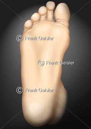 Anatomie Fuß, Fußsohle mit Fußballen und Zehen - Medical Pictures