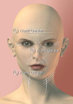 Anti-Aging der Frau, Haut mit Hautfalten und Altersfalten im Gesicht - Medical Pictures