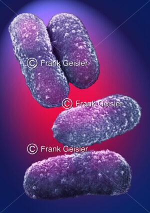 Bakterien, einzellige Mikroorganismen (Prokaryonten) - Medical Pictures