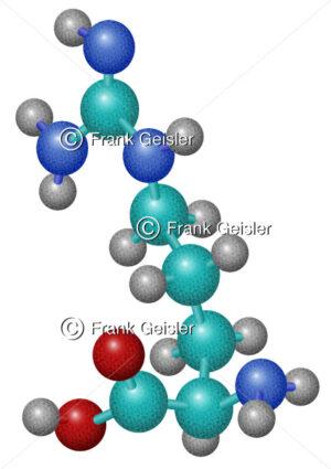 Biochemie Aminosäure Arginin, Arg-Molekül - Medical Pictures