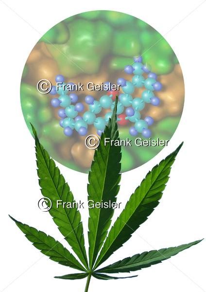 Cannabis, Cannabinoid-Rezeptor aus Hanf - Medical Pictures