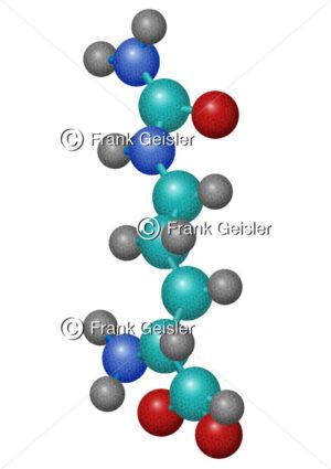 Citrullin-Molekül, Alpha-Aminosäure im Harnstoffzyklus - Medical Pictures