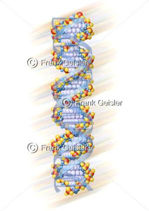 Genetik, Doppelhelix Moleküle mit Erbgut DNS DNA - Medical Pictures