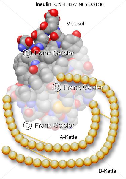 Insulinproduktion, Insulin-Molekül mit A und B Kette - Medical Pictures
