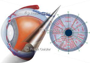 Irisdiagnose (Iridologie, Irisanalyse, Augendiagnose) in der Alternativmedizin - Medical Pictures