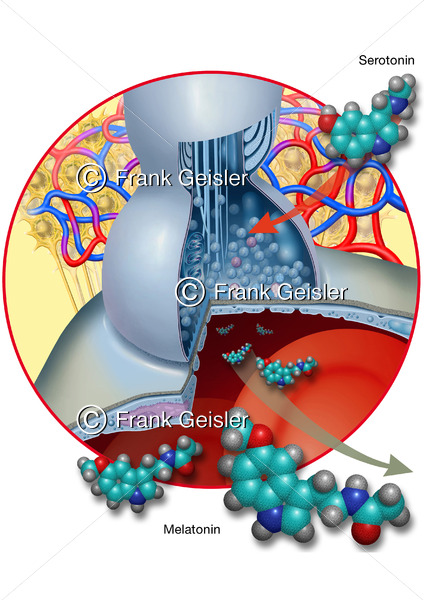 Molekularstruktur Nervensystem, Synapse mit Serotonin und Melatonin - Medical Pictures