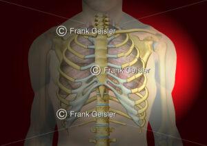 Notfallmedizin, Thorax mit doppeltem Rippenserienbruch - Medical Pictures