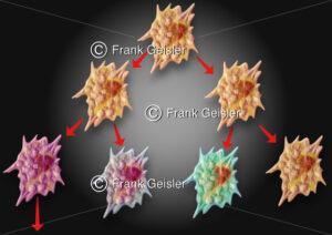 Onkologie, unkontrollierte Zellteilung bei Krebs - Medical Pictures
