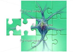 Puzzle mit Nervenzelle (Neuron), Symbol für Diagnostik in der Neurologie - Medical Pictures
