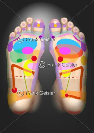 Reflexzonen am Fuß, Fußreflexzonen - Medical Pictures