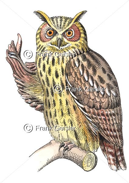 Uhu (Bubo bubo), Vogel als Symbol für Naturschutz - Medical Pictures
